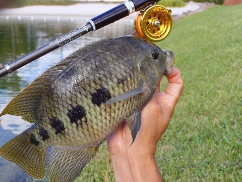Action Camera Tilapia With Micro Fly Reel By Penfishingrods.com
