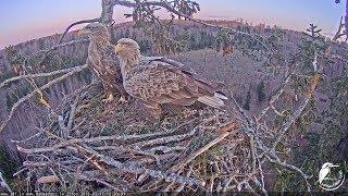 download musica LDF Jūras ērglis tiešraide 1 White-tailed eagle webcam 1 in Latvia