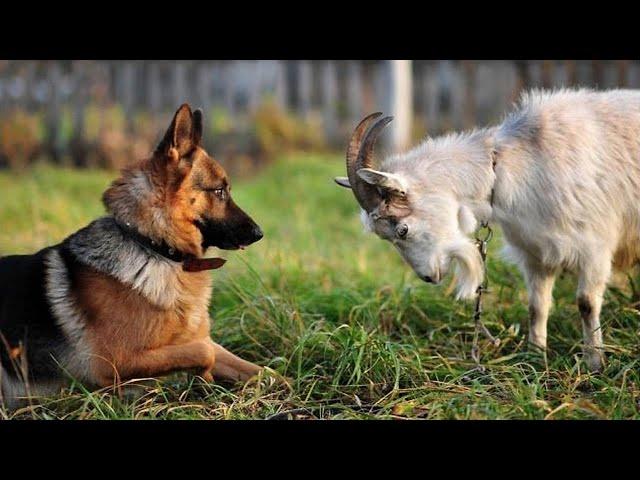 Забавные и МИЛЫЕ Животные поднимают настроение 2