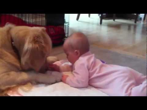 Baby's Tummy Time w/ Golden Retriever
