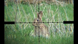 The Airgun Show – Scope-cam rabbit hunting, PLUS Daystate Wolverine R review