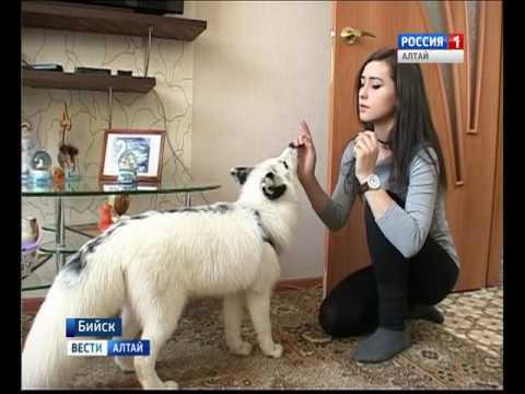 Белый лис завоевал сердца жителей Бийска и пользователей социальных сетей