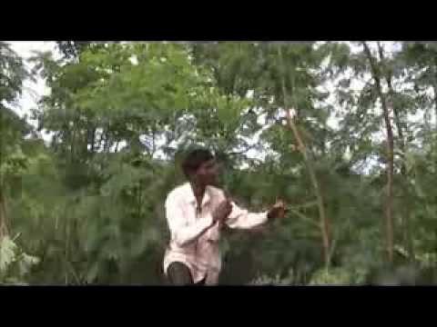 Forest tree pruning Kannada BAIF Karnataka