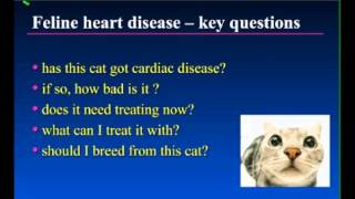 Feline Heart Disease - Key Questions