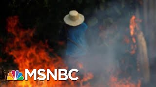 Brazilian President Jair Bolsonaro To Send Troops To Battle Amazon Fires  Hardball  MSNBC