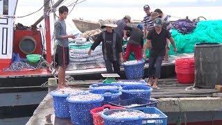 Ngư dân Quảng Trị ra khơi đánh bắt đầu năm trúng đậm cá cơm