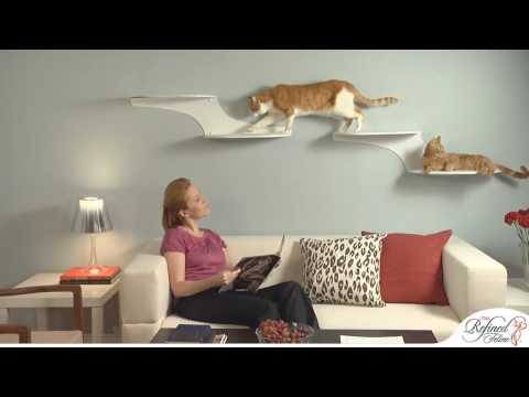 The Refined Feline Cat Furniture Showcase