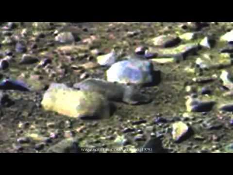 На Марсе обнаружили живого грызуна