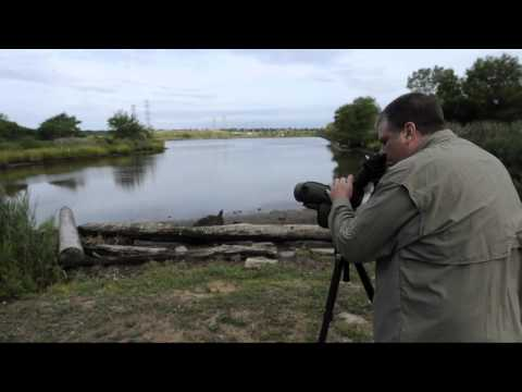 Kevin Bolton's Digiscoping Technique