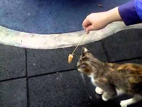 download lagu Kucing Nak Makan gratis