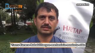 Yavru Karaca Rehabilitasyon merkezinin maskotu oldu