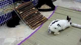 Daisy and her Baby Bunnies playing