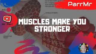 Muscles Make You Stronger Song