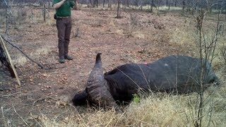 HUNTING SAFARI (Chasse) in MOZAMBIQUE by Seladang