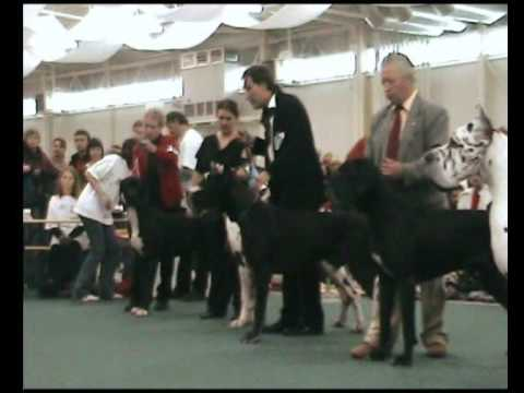 World Dog Show 2009 - Great Danes - World Winner black/harlequin/males - LORD Del Bianello
