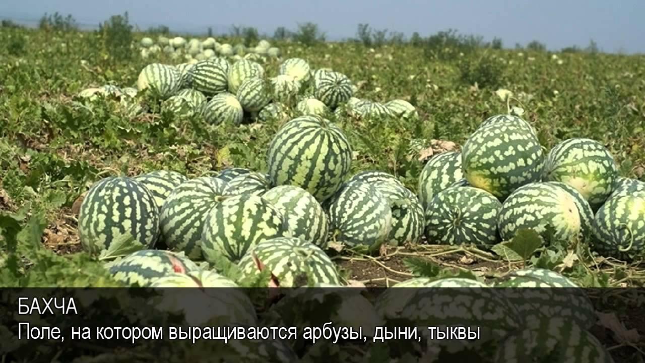 Ютуб онлайн ебля русский язык 3 фотография