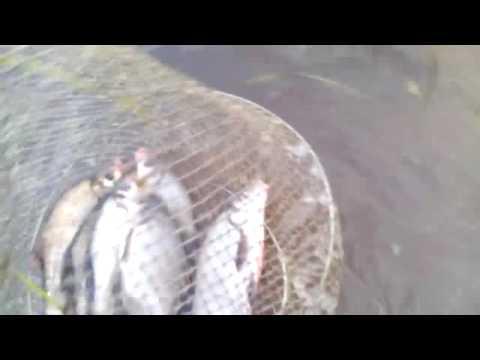 ловля раков на хлеб с чесноком видео