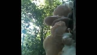 Mushroom Sex!!