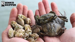 Sand Fleas VS Green Crab: Which is the Best Fishing Bait?