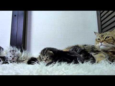 三度の飯より猫が好きな人の為の動画(1時間)