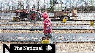 Migrant workers say they're being confined to farms