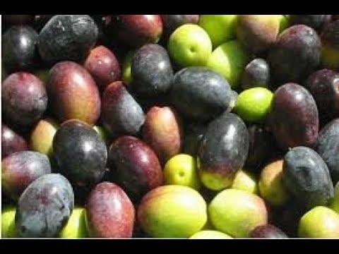 طريقة تخليل الزيتون الاسود التفاحى فى البيت