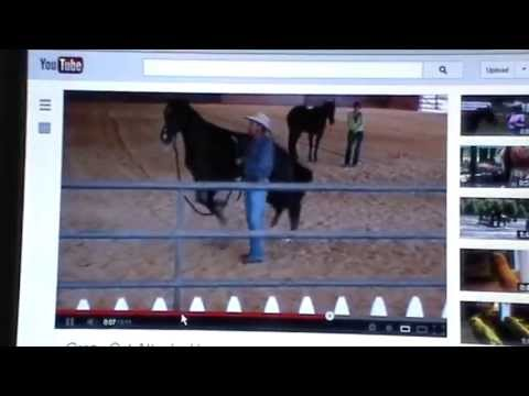 Review of Two Videos- Women Abusing Horses & Cat Jumps on Horse- Instincts & Reactions