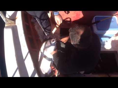 Akbuk De La Pêche À La Cumhur Capitaine 1
