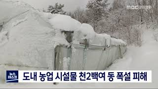 농업 시설물 천2백여 동 폭설 피해