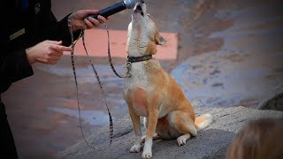 Best of Dogs 🎤🐶 Awesome Dogs Singing (Full) [Funny Pets]