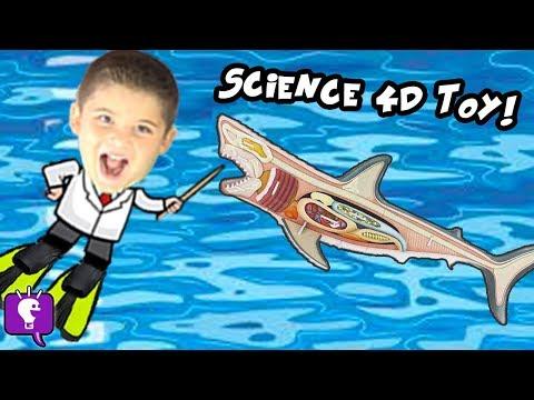 What's in a GREAT WHITE SHARK! HobbyScience Lab and Shark Facts HobbyKidsTV