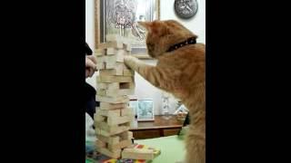 Download Un gato jugando Yenga? Ver para creer... 3Gp Mp4
