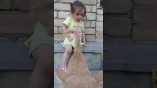 Funny baby and cat