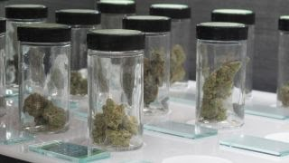 Struggling towns turn to medical marijuana