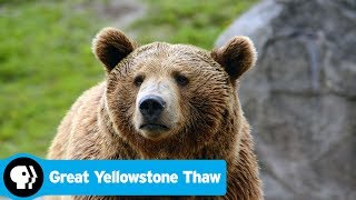 GREAT YELLOWSTONE THAW | Next on Episode 3 | PBS