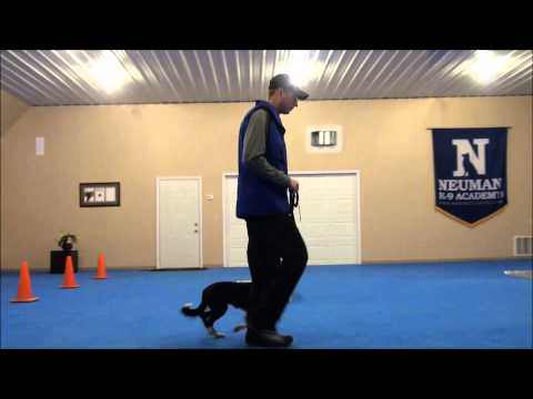 Jett (border Collie) Dog Training Video video
