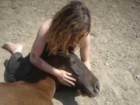 Horse story - Leos life