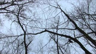 Arkansas Green Timber Duck Hunting