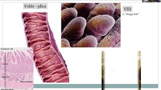 Pathophysiology, Chapter 13 - Gastrointestinal Tract, Part 1 of 2