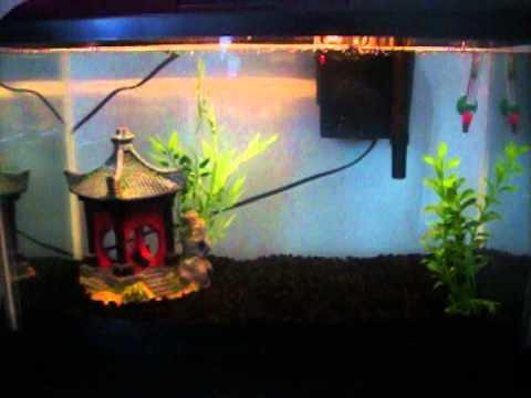 10 gallon fish tank asian decoration youtube for Asian fish tank decorations