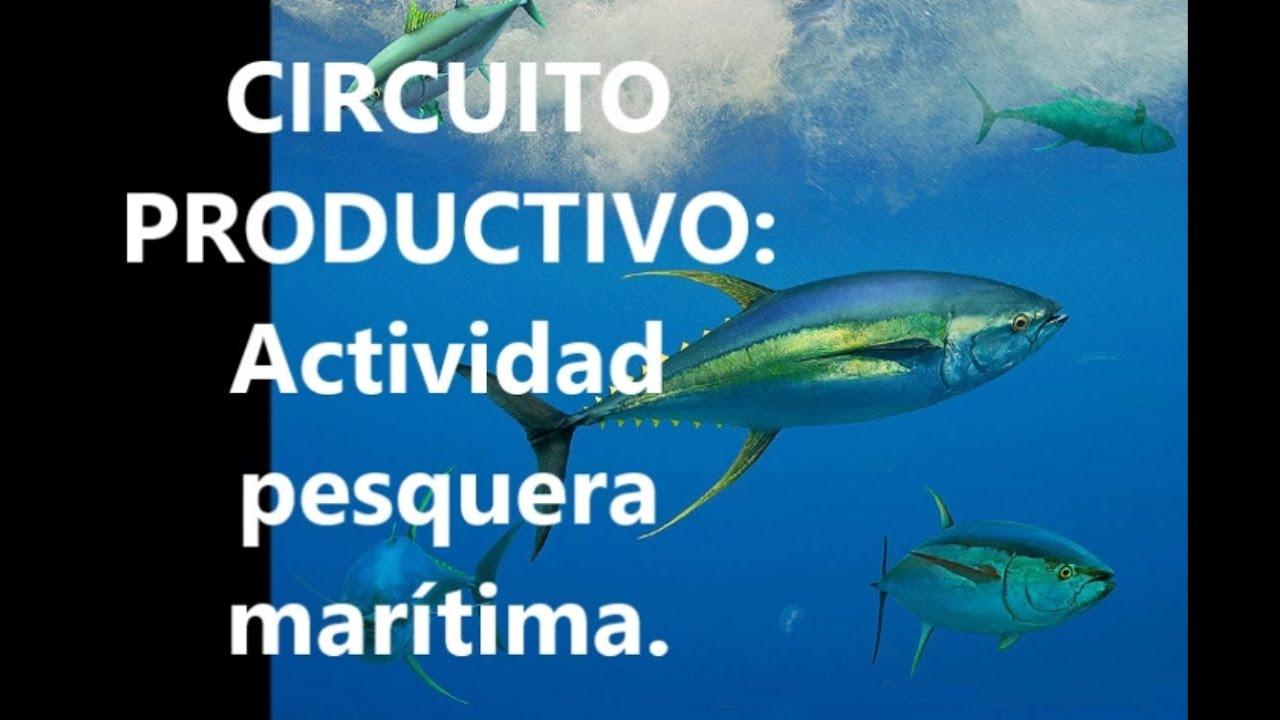 Circuito Productivo : Circuito productivo actividad pesquera youtube