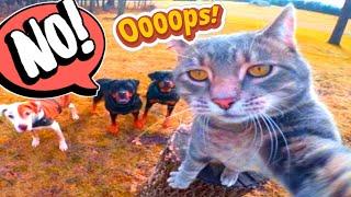 Funny Cat Dog   Funny Animals   Funny Dog BOSS   Funny Cat Boss