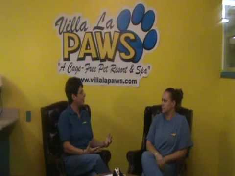 Avoiding Fur Matts Pt. 1: Pet Grooming Tips from Villa La PAWS