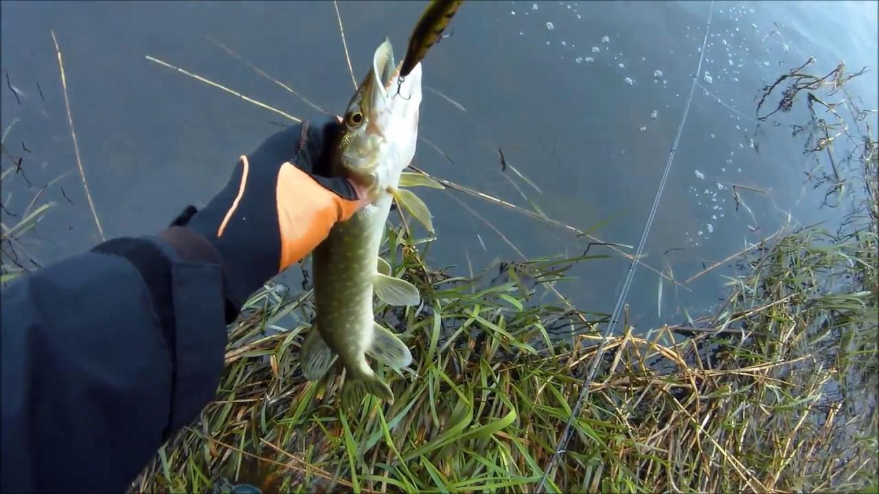 северная рыбалка на щуку видео