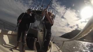 Catalina Island - Wide Open Fishing