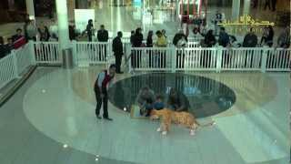 National Geographic Augmented Reality at Seef Mall