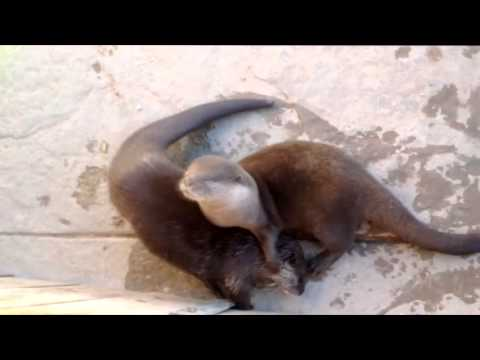 Roos N More - Cute Talking Otters - Exotic Animal Rescue Petting Zoo