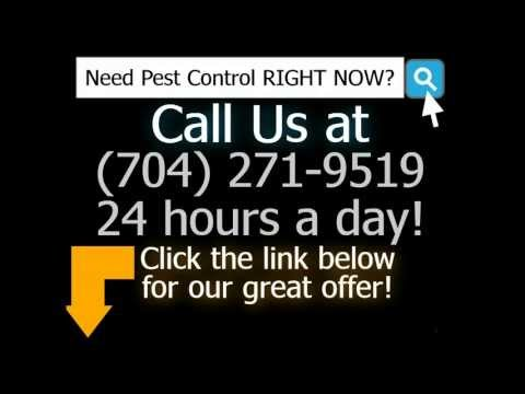 24 Hour Emergency Pest Control Charlotte NC