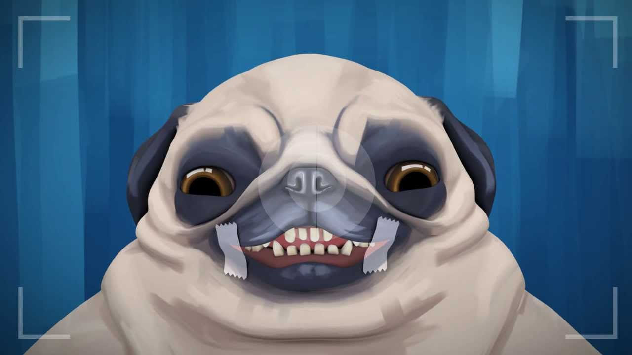 Any Questions Animation PICKLES. PUG ANIMATION...