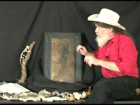 Famous Fossil Ida (Plate B): Analysis with Dr. Robert Bakker